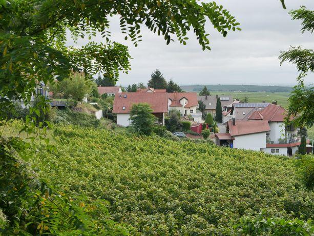 Aussicht über Weinberge