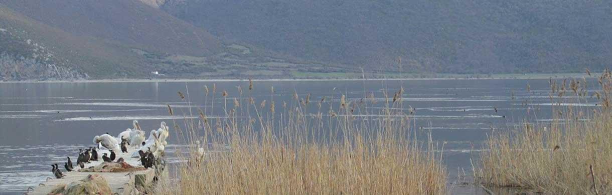 tours/prespa-lake-birds-big.jpg