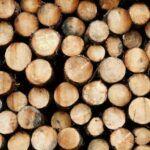 A legtöbb betakarított fából származó szén-dioxid hamarosan visszatér a légkörbe