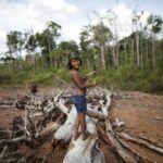 Brazil katonáknak kell megvédeniük az őslakosokat a fakitermelőktől