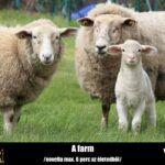 Varga Lóránt – A farm