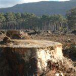 Brüsszeli bíróság előtt Románia erdőirtás miatt