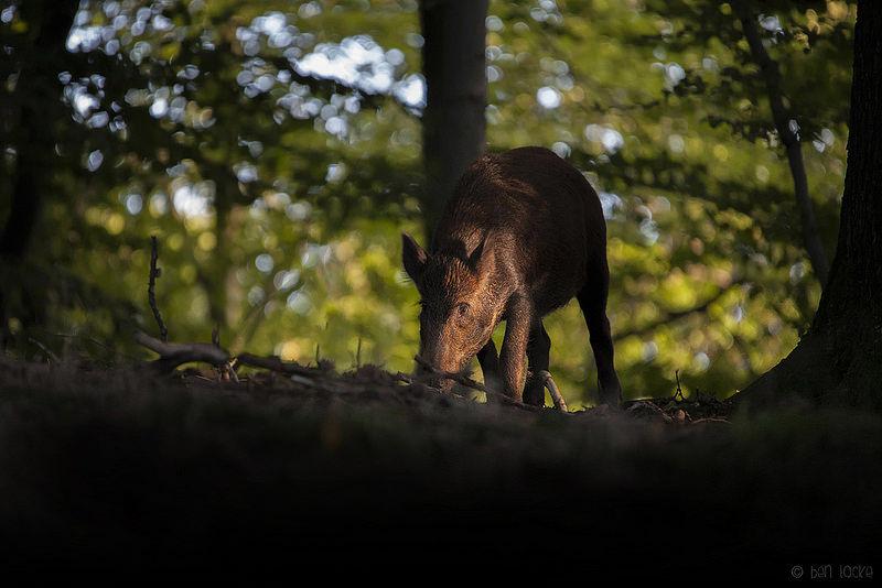 Radioaktivak az állatok Csehországban - ClimeNews
