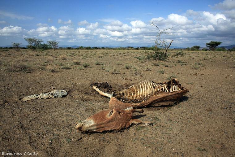 Fotó: Christopher Furlong   Orosz rulett a természet ellen   ClimeNews - Hírportál