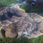 Amazóniai erdőirtás mérséklése | ClimeNews - Hírportál