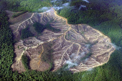 Amazóniai erdőirtás mérséklése