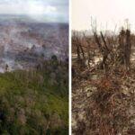 A globális felmelegedés miatt rekordmértékű az erdőpusztulás