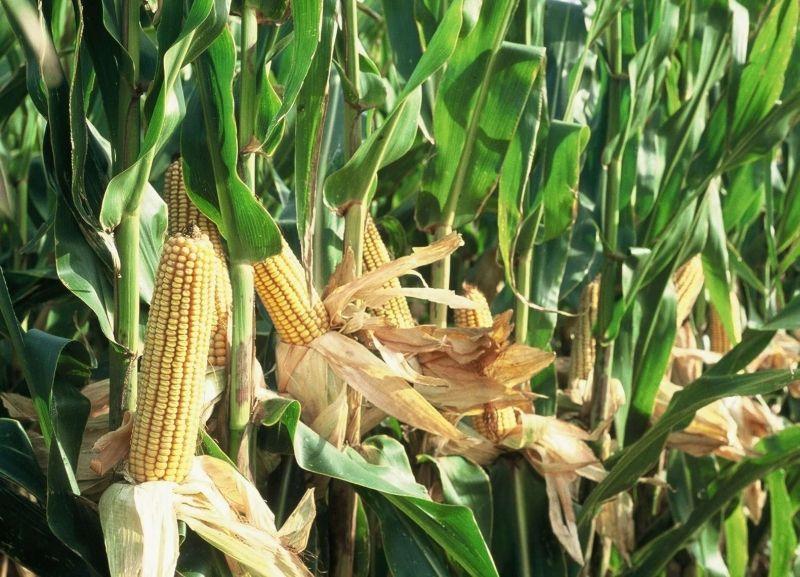 Nem hasznosulnak eléggé a tudományos eredmények a mezőgazdasági termelésben | ClimeNews