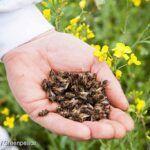 A neonikotinoid növényvédő szerek nemcsak a házi méheket, hanem a vadvilágot is veszélyeztetik
