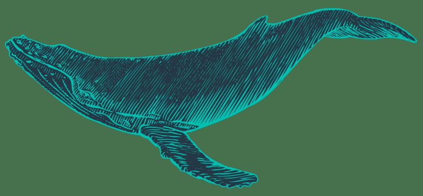 Hogyan változtatják meg a bálnák az éghajlatot