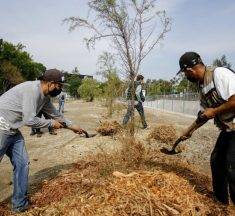 Reforestación en GDL planea llegar a 55 mil árboles