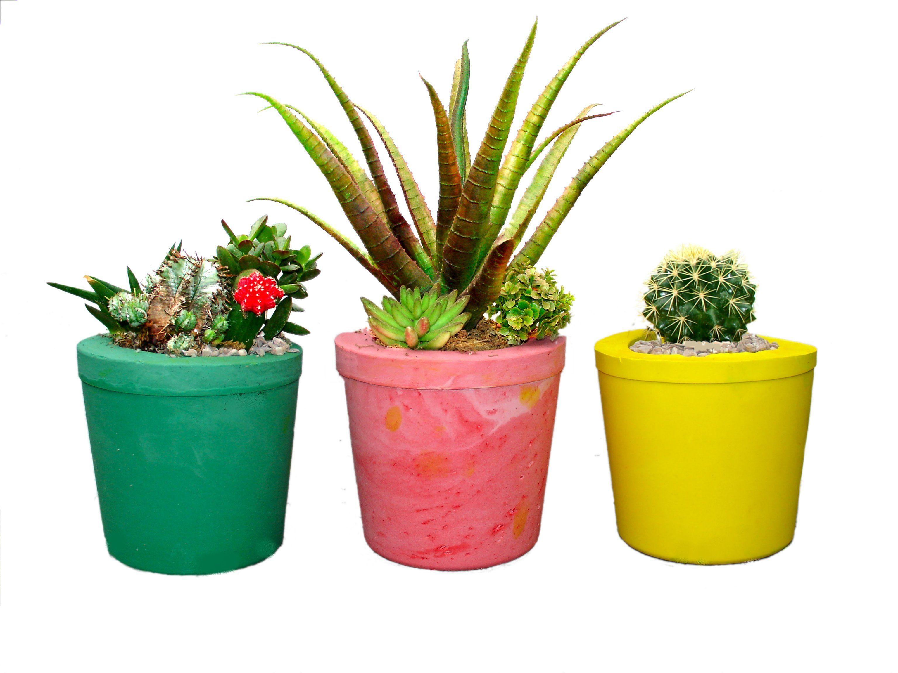 Magic Planting Pot Casting Kit