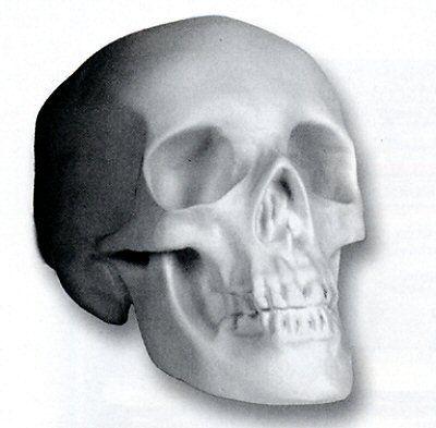 Human Skull | Casting