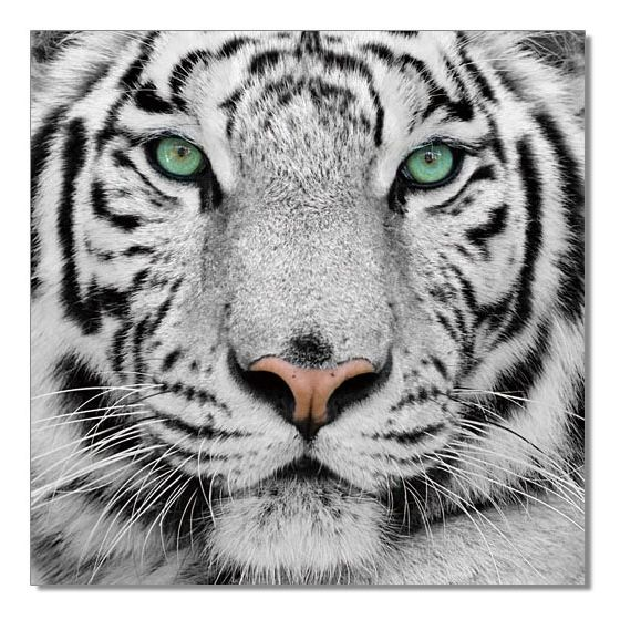 ✅ Wall Art Black & White Tiger | VivaSalotti.com | pic1