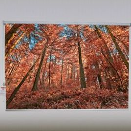 Autumn forest Roller Shade