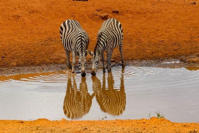 africa-4045665_640