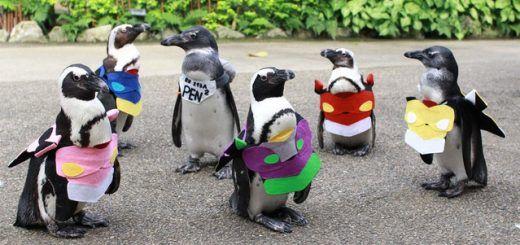 cover penguin eva