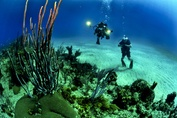 Top 10 Scuba Diving Sites in the USA