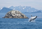 10 Best Whale Watching Destinations in the USA