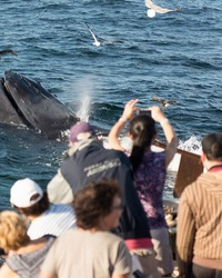 Top 10 Tourist Attractions in Cape Cod and the Islands