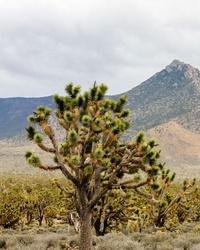Top 10 Tourist Attractions in Phoenix, Arizona