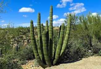 Tucson, Arizona Top 10 Attractions