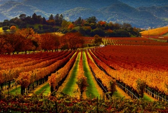 Top 10 Weekend Trips for Wine Lover in the USA