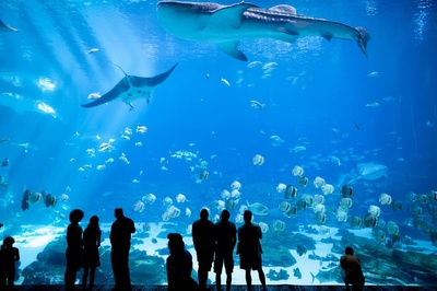 Top 25 Best Aquariums in the USA