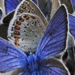 El Poder de la Mente Subconsciente para Llegar a la Plenitud