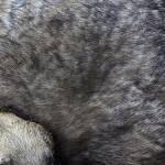 Casinoenlinea.es: 53.000 Toros Muertos, y Se Llevan Gastados €2.8 Mil Millones en las Corridas los últimos 5 Años