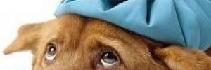 Beneficios de la cremación de mascotas