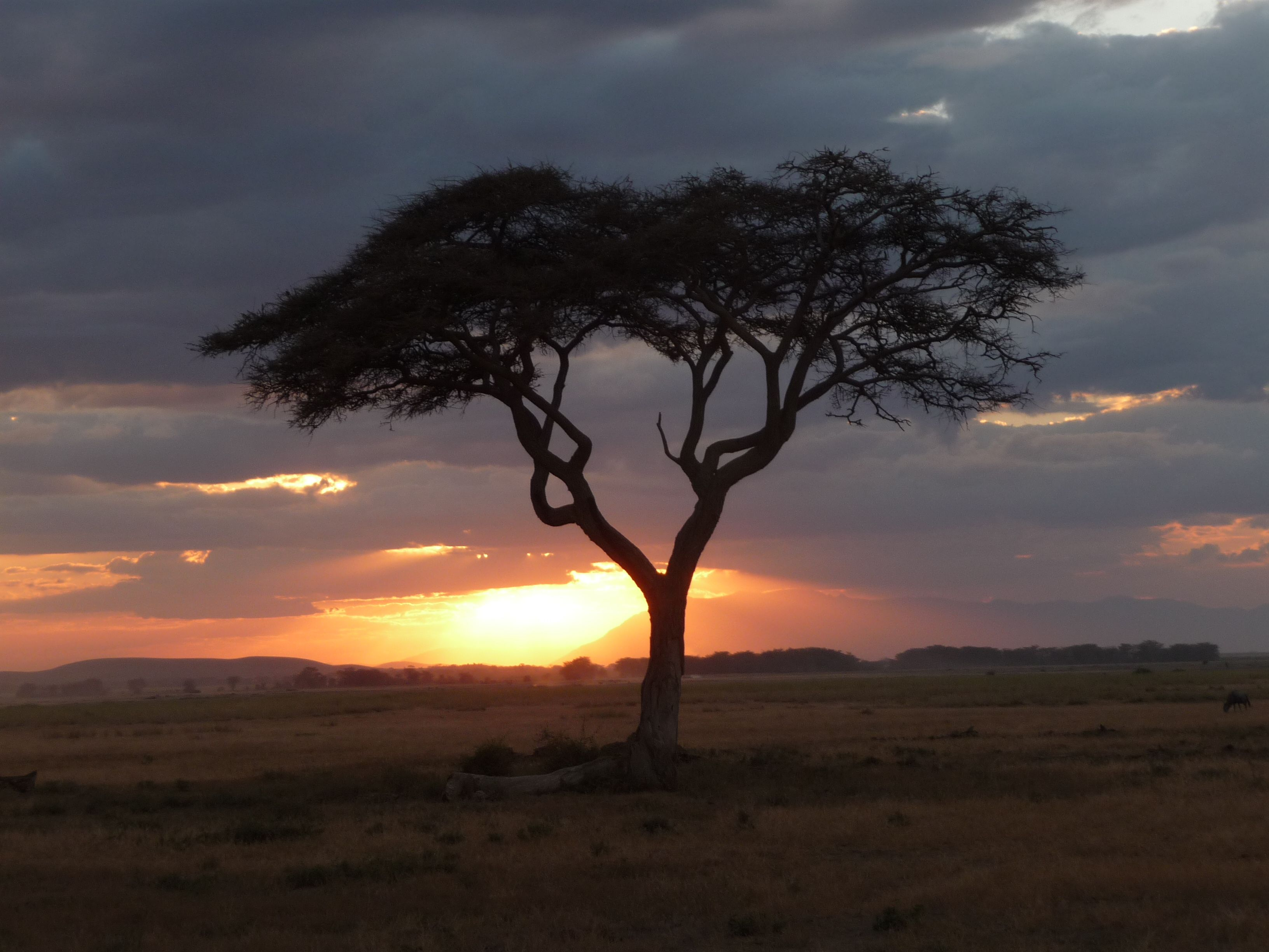 Kenya is beautiful and you can see Kenya's big five, whats not to love.