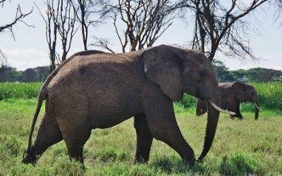 FREE Safari Gap Year Experience!