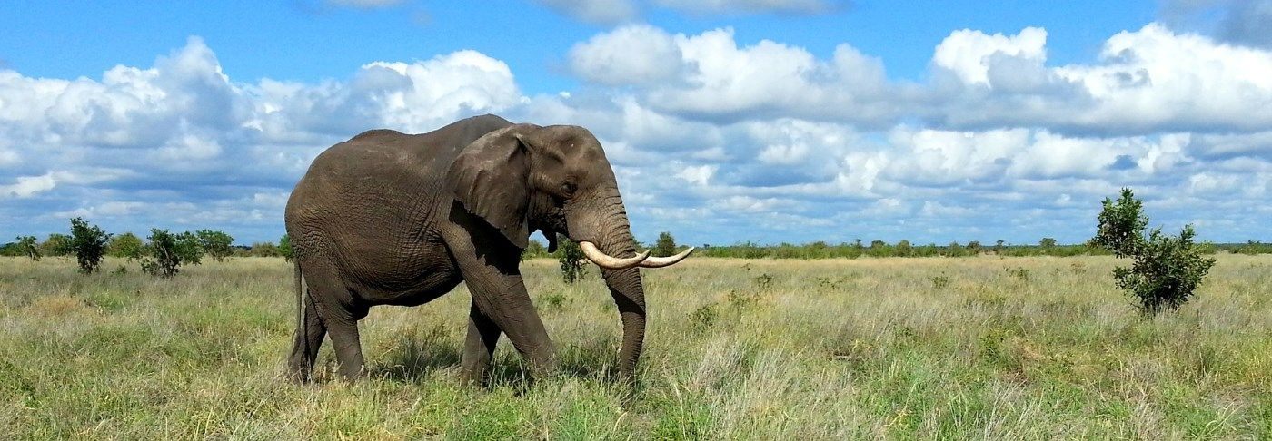 The worlds largest mammal hence why its one of Kenya's big five!