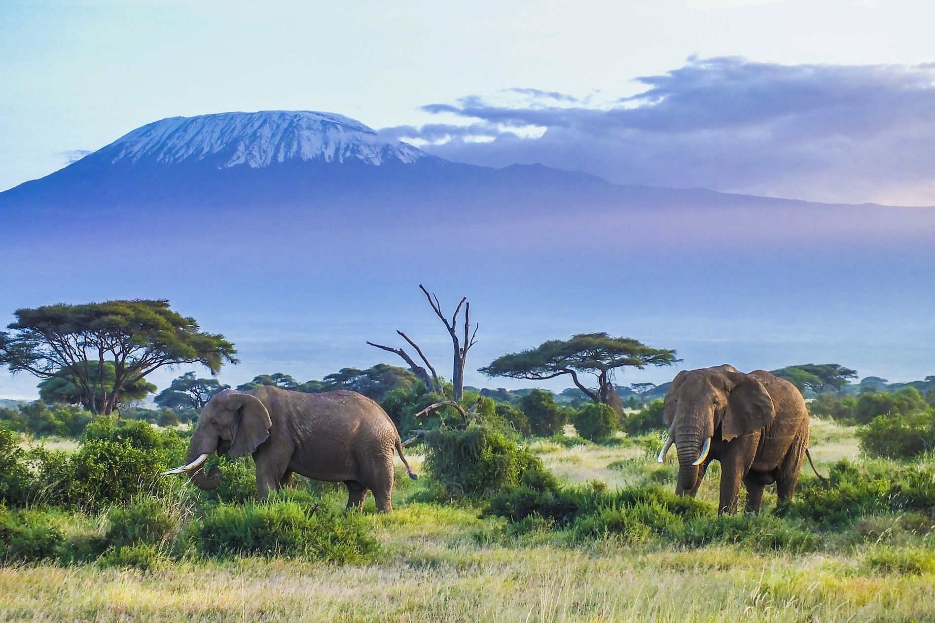 See some beautiful wildlife on your Gap Year seeing Kenya's big five