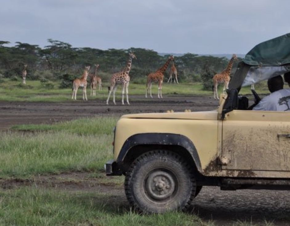 On Safari in Kenya