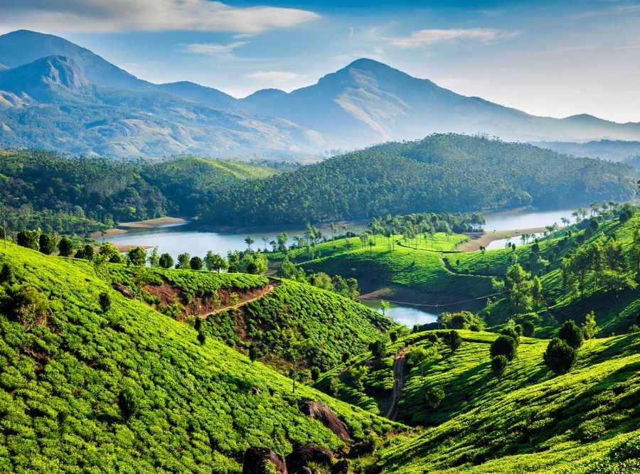 Check out the tea plantations on a Gap Year to India