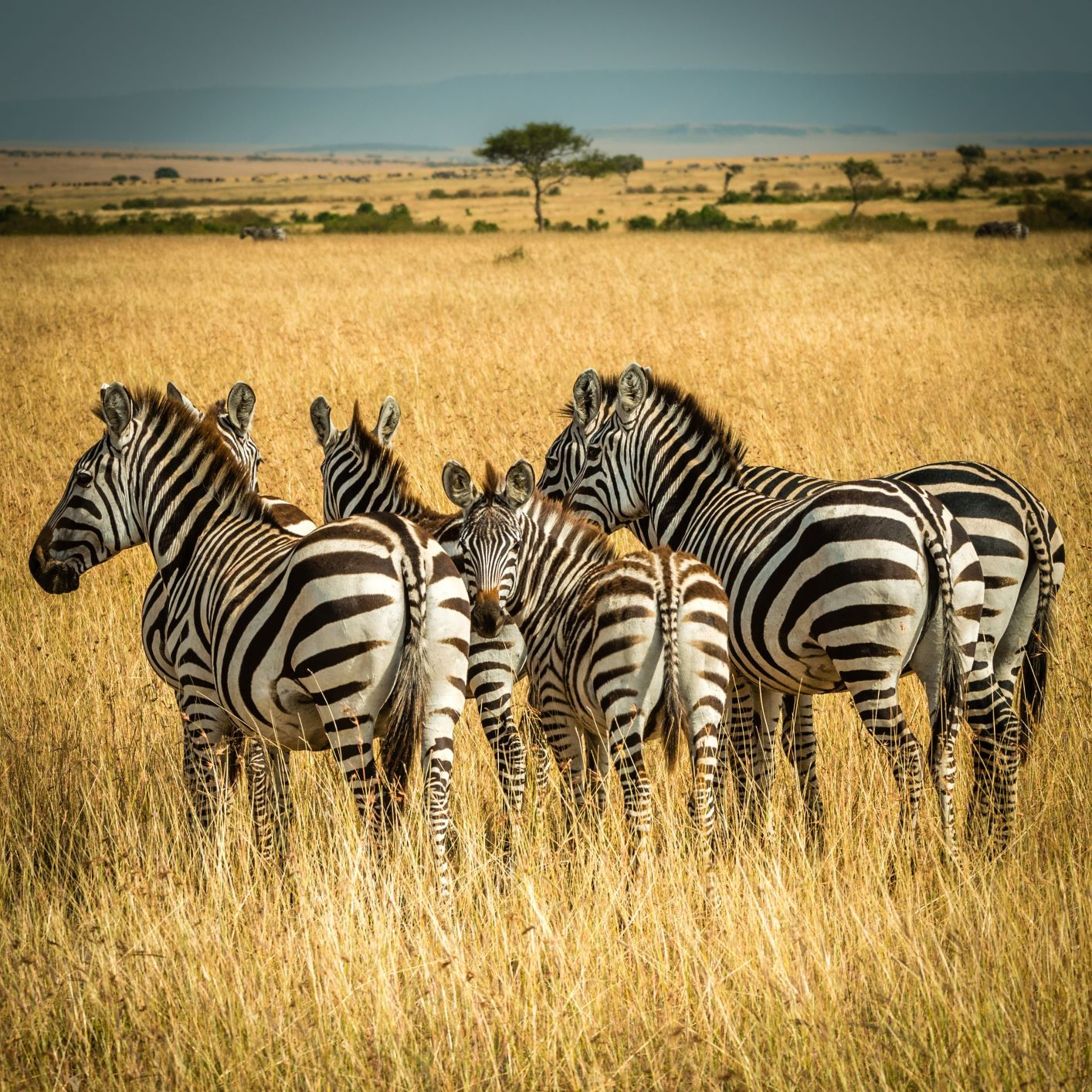 Don't forget to do a safari when travelling to Kenya