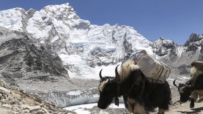 10-fascinating-facts-about-yak