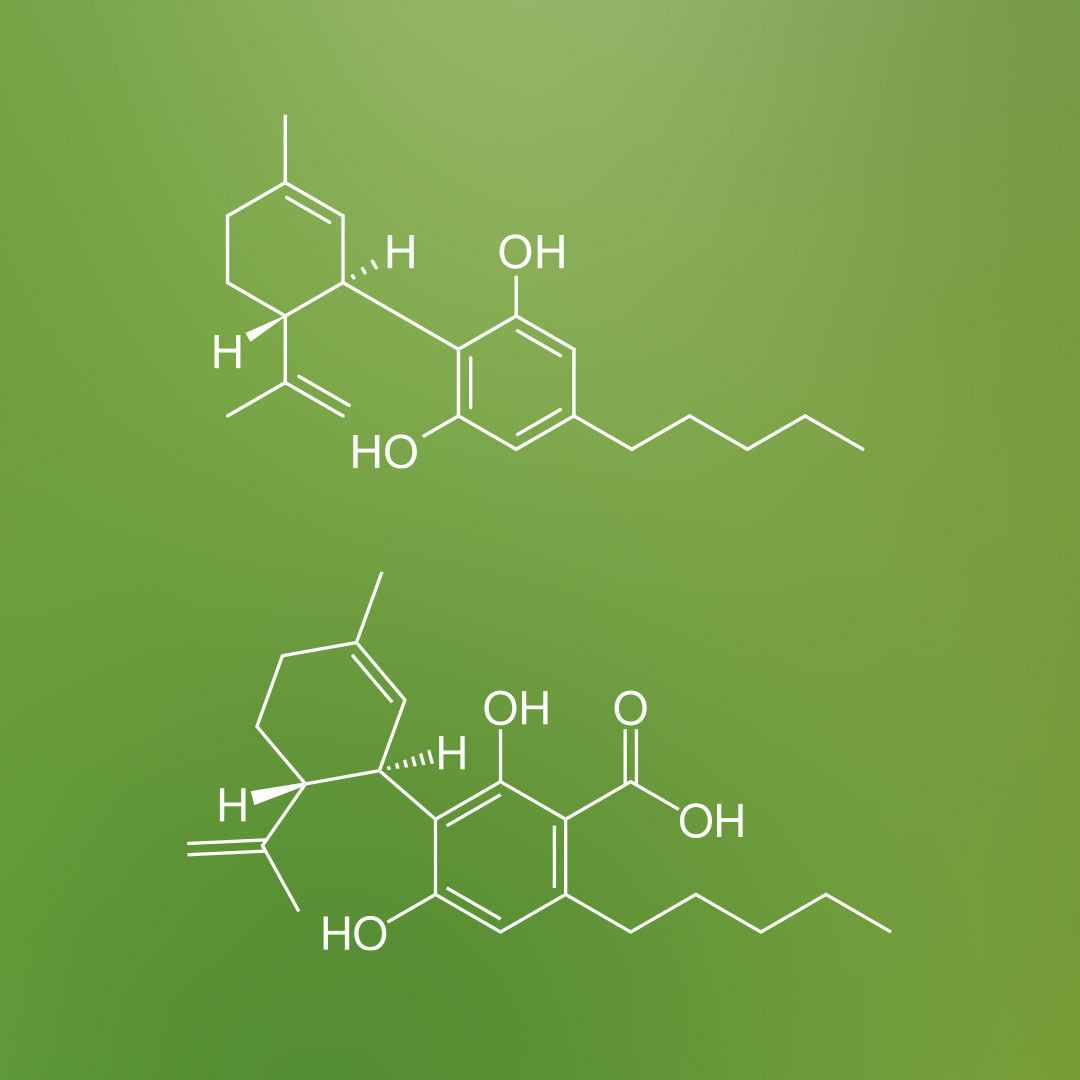 What is the difference between CBDa vs CBD?