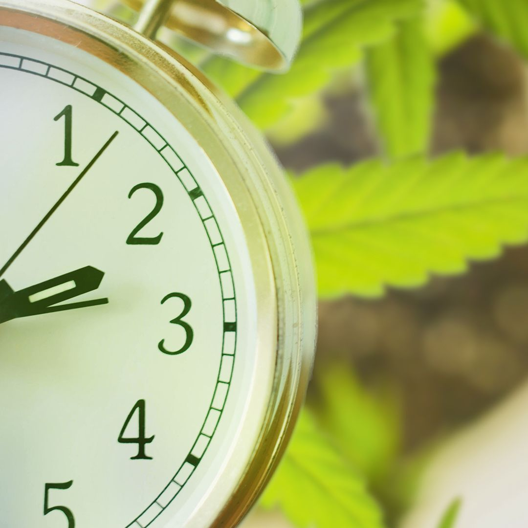 A clock and cannabis leaves on the background