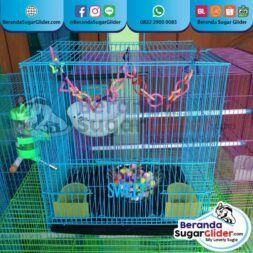 Kandang Besi Lipat Sweet Ukuran Kecil Small Size S Full Set 1 Hewan Peliharaan Joey Sugar Glider SG Bajing Kelapa Burung Gecko Guinea Pig Hamster Marmut Tupai Terbang