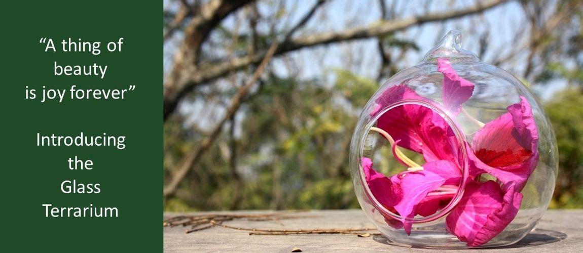 The Glass Terrarium