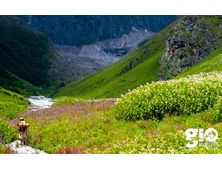 Valley of Flowers trek & Hemkund Sahib