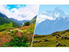 Kuari Pass & Valley of Flowers Trek [Price on Request]