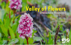 Valley of flowers & Hemkund Sahib Trek for Women