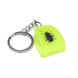 Accedre Luminative Prank Tiger Beetle Key Chain