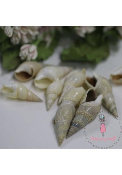 Natural Sea Shell #4 - Long