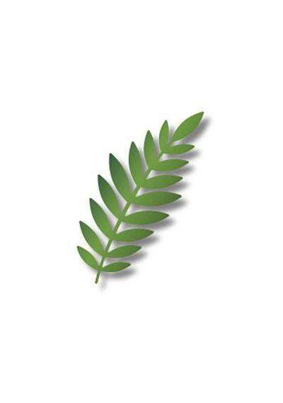 Large Green Leaf - Die