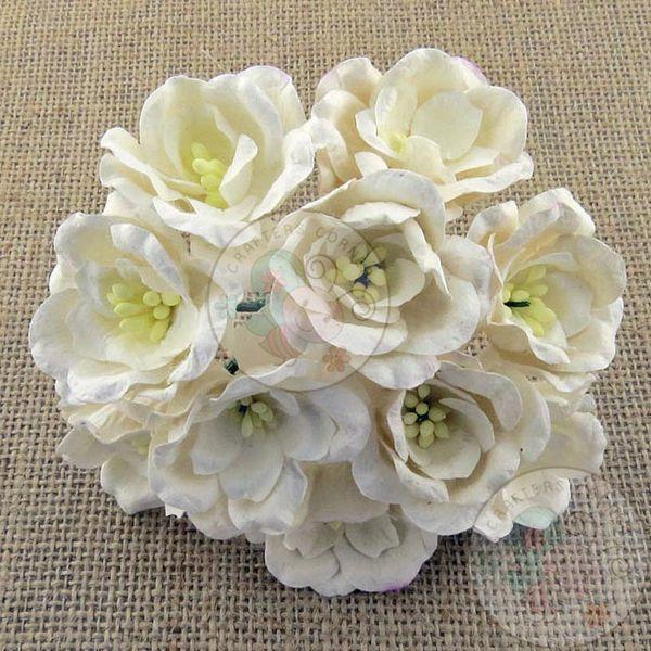Poppy Rose - Cream